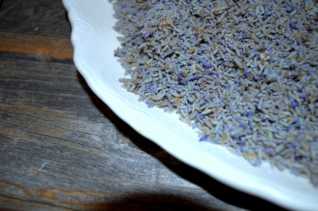 Harvesting and Using Lavender