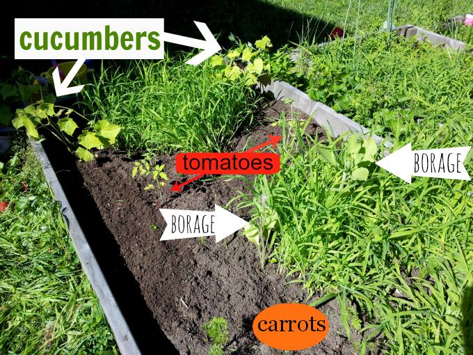 garden partially uncovered