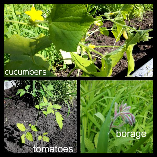 veggies_2